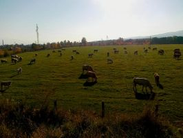 Field by Patres68
