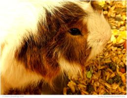 Guinea Agog by In-the-picture