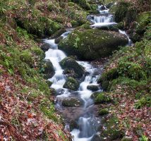 Be like a rock in the stream.. by ukwreckdiver