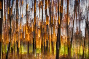 Foret10 by hubert61