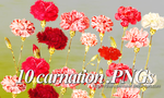 Carnation PNGs pack by TheHopeMaker
