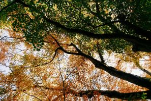 Underneath the Acer Tree II by Gerard1972