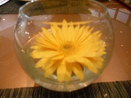 Flower in Glass by Alaudina13