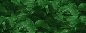 Tiled Green Leaves by brenbren