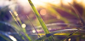 Grass by Sylar113