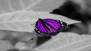 Purple Butterfly by SCH4DE