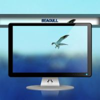 Seagull by Momez