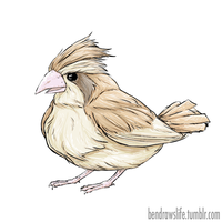 Pidgey by bensigas