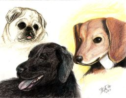 April - Our 3 Dogs by Myrcury-Art