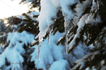 Icicled. by CelticCari