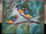 Gouldian finches by Ceril91