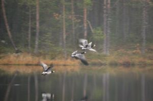 fly by KariLiimatainen