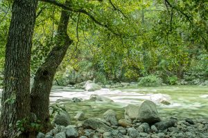 River in the woods by Anto2b