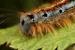 Caterpillar by Alliec