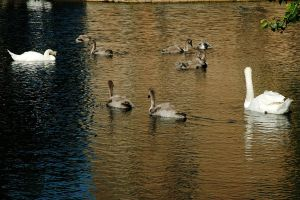 The Family on the Moat by EarthHart