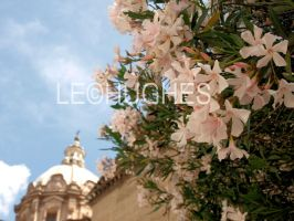 Spring in Rome by lehPhotography