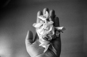 dead orchids. by BlackDennie