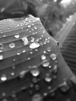 Drops on a Leaf by lackar