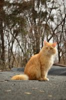 Cat pose1 by squirrel-chaser