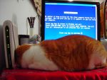 Even Cat Cant Deal With Bluescreen by eabevella