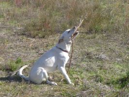 Molly and her stick by BlackFlameVampire