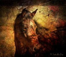 UVM: Morgan Horse in Shadows by iadonna