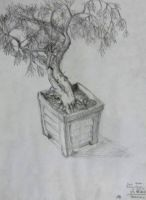 Larch Bonsai by TheGirl-WhoCouldDraw