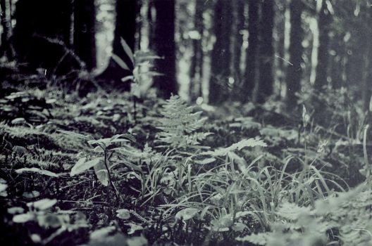 Forest_floor by angra1811
