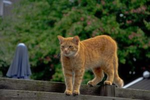 Red cat by RavensLane
