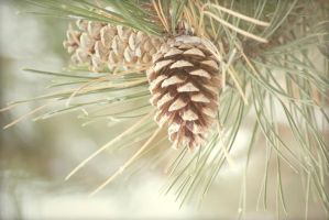 Pine cone by CozyComfyCouch
