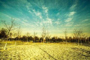 Winter landscape by sunny2011bj