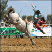 How to Dismount a Horse by Goanna-Equine