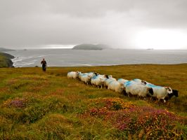A Shepherd's Life by volpe60610