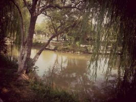 Trees over the lake by Laura-in-china
