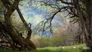 a branch in spring by rdalpes