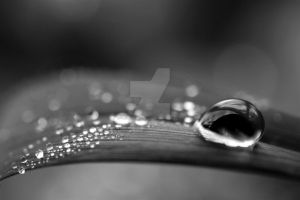 BW Water Drops 3 by devilguineapig