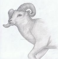 Shading Thinhorned Sheep by ElectricVISUALS