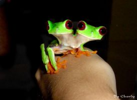 Frog 2 head by charlyn1004