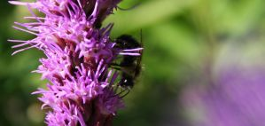 Bumble Bee by Photolover68