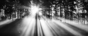 Transitory Glory by Capturing-the-Light