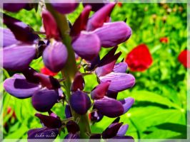 Purple sth from garden by pavlickk