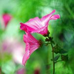 mellifluous by augenweide