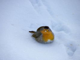 Winter bird 2 by Flore-stock