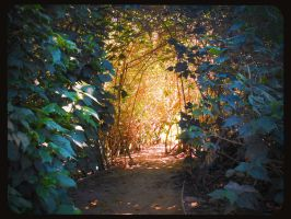 Enchanted Trail, into the Warmth by WillisNinety-Six