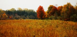 Autumn Meadow by S-H-Photography