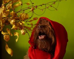 Little red riding hood by 030Marii