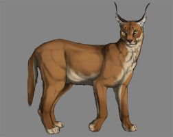 Caracal by Esava