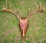 Copper Whitetail Skull with Brushed Gold, FS by TheSilverCaribou