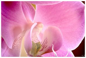 orchidee_HDR by SullenSquid