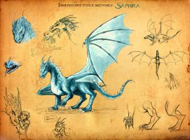 Saphira sketches by Ticcy